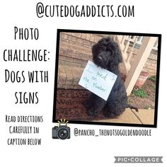 @pancho_thenotsogoldendoodle is helping me with a new game! This is a little different then before. Make sure you read the directions carefully.  This is a photo challenge meaning Im challenging you to take a NEW picture. The challenge is to take a picture with your dog and a sign. . It does NOT have to be dog shaming (although in Panchos picture he really DID pee on the plumber I asked his mom ). It can be cute funny shaming what ever you decide. Your dog does NOT have to be holding the…