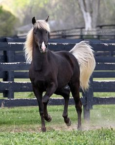 Love dark horses with light manes.
