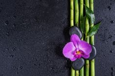 Image Details: Isignstock Contributors Stock photo of Spa concept with black basalt massage stones, pink orchid flower and a few stems of Lucky bamboo covered with water drops on a black background; with space for text. Lucky Bamboo, Pink Orchids, Water Drops, Stems, Black Backgrounds, Massage, Concept, Space, Flower