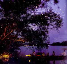 i want to be inside this picture--fireflies, magical tree, water, purple nighttime sky. Vanilla Twilight, Nighttime Sky, Twilight Sky, Magical Tree, Owl City, Local Attractions, Night Time, National Geographic, Google Images