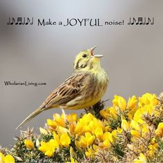 Make a JOYFUL noise! http://wholarianliving.com