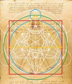 El ser humano, como Leonardo da Vinci nos dibujó, encaja perfectamente sobre este diseño. Esta imagen es la prueba.