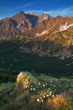 Runil (northern region in summer) Alone Art, Grandeur Nature, Places Worth Visiting, Central Europe, Bratislava, Slovenia, Places To See, The Good Place, High Tatras