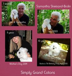 Simply Grand Coton de Tulear puppies, Jim posed for photos with Samantha in my patio (& was showered with kisses!) during one of his visits to Phoenix. Sammie was only 7 weeks old. Samantha traveled to her beachfront home in Malibu when she was 13 weeks old. Within just a few weeks Barbra & Sammie were on a jet headed for the East Coast where they appeared on The Oprah Show. Luckily Sammie has never been camera-shy, & she has traveled around the globe, always at Barbra's side.