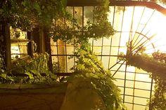 Titkos kertek és terek a belvárosban | Őszi városnéző túrák – Imagine Budapest: Két és fél órás túránk során olyan magánházak, intézmények kertjeibe is bejutunk, amelyeket a nagyközönség számára rendszerint nem nyitnak ki, bepillantást nyerünk egy nagyváros emberléptékű térhasználatáról, megismerjük a velünk élő állatokat és növényeket, és közben emberi sorsokról hallunk: padokon szövődött szerelmekről, árnyas fák alatt megélt tragédiákról, ifjúi fogadalmakról és időskori megnyugvásról.