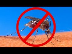 Tips To Keep The Mosquitoes Away - RVing.how