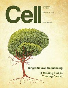 DNA tree (Illustration by Erik Jacobsen of Threestory Studio.)