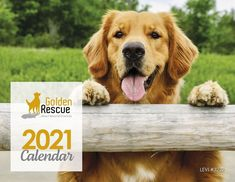 Our 2021 Calendar is ON SALE NOW! This beautiful full-colour calendar is a wonderful tribute to our rescues. Each month features new Goldens and some very special dates. Order yours TODAY by emailing grstore@goldenrescue.ca #goldenretriever #2021calendar #rescuedog #ordertoday #grstore Best Stocking Stuffers, 2021 Calendar, Rescue Dogs, Fundraising, Adoption, Great Gifts, Dates, Colour, Animals