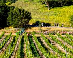 Why every runner should consider a race with the Wine Country Half Marathon series: http://www.theactivetimes.com/will-run-wine