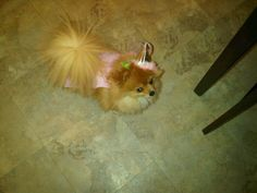 olivia dressed up as a princess for halloween