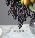 Privet berries: December through February Gold Flowers, Floral Flowers, Fresh Flowers, Florals, Floral Wedding, Wedding Bouquets, Wedding Flowers, Blue Wedding