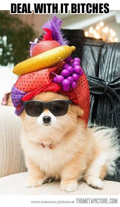 Fabulous Pomeranian is fabulous. Bitches. I really dont know why this is making me laugh so hard