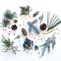 Ja Soon Kim - Neatly ordered objects: High desert evergreens