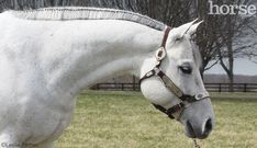 I think I am going to do this to Jetta's mane for the 4-H Show this june. It will lengthen his neck because he is ALWAYS over-flexed.