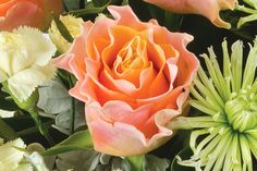 This orange rose is distinguished by it's curled petals. It's delicate texture and bright orange colour make it a truly unique flower.