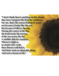 """🌻 Calendar Girls Sunflowers quote: """"wherever light is, no matter how weak, these flowers will find it. And THAT's such an admirable thing. and such a lesson in life"""" Sunflower Quotes, Sunflower Pictures, Sunflower Art, Sunflower Garden, Song Quotes, Words Quotes, Wise Words, Life Quotes, Sayings"""