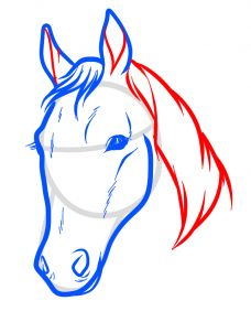 draw horse heads and faces step 14