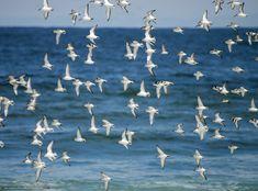 descarca imagini de fundal mare, Pescarusi, natură Imagini de fundal gratuite pentru rezoluia desktop 5610x4158 — imagine №616395