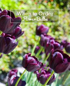 Fall-Planted Flower Bulbs (Spring-Flowering) - Tulips, Daffodils, Crocus, and more These bulbs bloom between late winter and early summer. Depending on the species the bulbs should be planted between early and late autumn. See the specific instructions on the product pages.