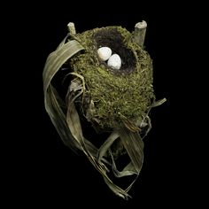 """""""Amazing Bird Nests From Around the World"""" a collection of beautiful homes Spotted-nightingale Thrush"""