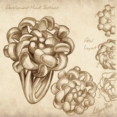 Convert this Hand Sketch into a stunning ring that is inspired by Chrysanthemum Flowers.