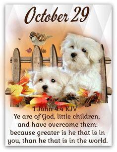 Daily Scripture, Scripture Verses, October Calender, Calendar, Greater Is He, King James Bible Verses, 1 John 4, Little Children, Thing 1