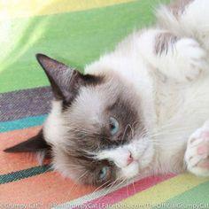 #GrumpyCat #photo Grumpy Cat stuff, gifts, coupons, meme on www.pinterest.com/erikakaisersot