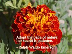 Patience Picture Quotes, Famous Picture Quotes about Patience, Patience Quotes and Sayings with images, Search Quotes on Patience. Patience Quotes, Be Patience, Red Pictures, Nature Pictures, My Flower, Flower Power, Curiosity Quotes, Compassion Quotes, Emerson Quotes