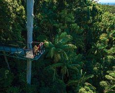 Tamborine Rainforest Skywalk: Tamborine Rainforest Skywalk is a one and a half kilometre rainforest walking experience which inlcudes the Skywalk Bridge (steel-structured), the 40 metre Skywalk Cantilever (steel-structured) and the Cedar Creek Viewing Platform, joined by a...