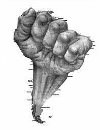 Resultado de imagen para latinoamerica revolucionaria Arte Latina, America Continent, South American Art, Latino Art, Geniale Tattoos, Calf Tattoo, Rock Posters, Travel Design, Arm Tattoos For Guys