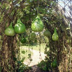 the gourd tunnel