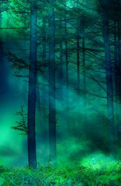 This is what I always imagine an enchanted forest would look like