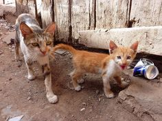 #Cat and kitten. Marrakech.  Like,Repin,Share, Thanks!