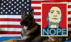 """Hillary to Military K9 Handler: 'Get that F__king dog away from me.' August 2, 2016/in Must Read, National Security, Policy, Politics /by Dr. Rich Swier .....""""Hillary doesn't care about anyone but Hillary."""""""