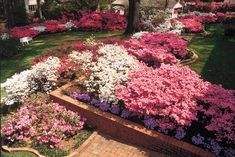 Texas's longest Azalea Trail can be found in Tyler, with blooms set to burst this month. Description from deepsouthmag.com. I searched for this on bing.com/images
