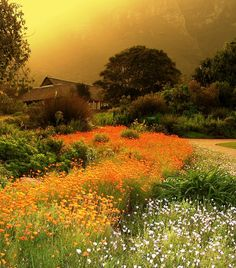 Kirstenbosch National Botanical Garden, South Africa.... Autumn in South Africa is  mid-February to April