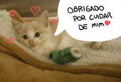 Boas Notícias: Como cuidar de gatos