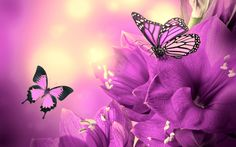Wallpapers For > Purple Butterfly Backgrounds