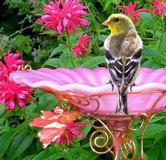 """""""In order to see birds it is necessary to become a part of the silence."""" ~ Robert Lynd"""