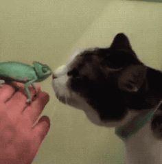 I wanna pet the kitteh | AmazeWow