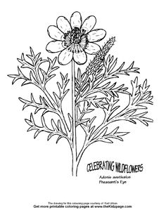 Pheasant's Eye Flower Free Coloring Pages for Kids - Printable Colouring Sheets