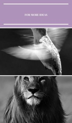 Super photography black and white animals god 54+ Ideas #photography black and white animal photography Super photography black and white animals god 54+ Ideas