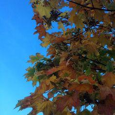 #365 #autumn