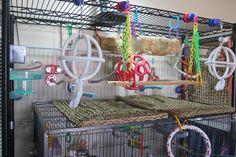 ♥ Pet Bird Cage Ideas ♥  Parakeet playground version 3 section 1, playgym, bird toys