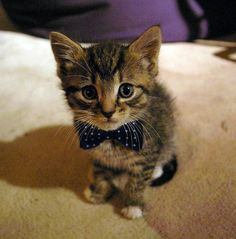 kitten with a bow tie.