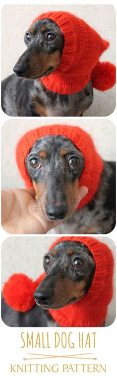 Such a cute little dog hat! It even has a pom-pom! LOL! #doghat #luckyfoxknits #hat #dog #cutedog #knittingpattern #dachshund #doxie #wienerdog #knitting #diy