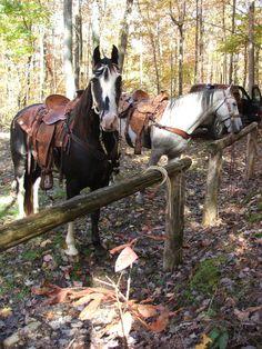 the greatest horse ever! Horse Ranch, Horse Farms, Kentucky, Creatures, Horses, Smoke, Blue, Animals, Group