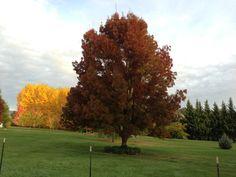 #Medford #Oregon #Fall #trees