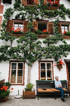 Hallstatt, Austria (espaliered trees are very popular)