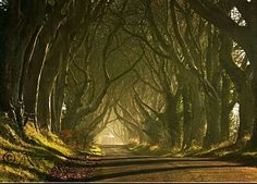 A beautiful road in #Ireland